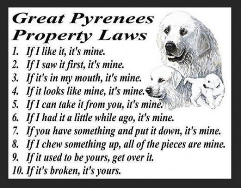 Great Pyrenees.jpg