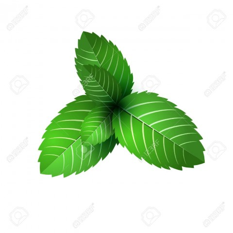 52731881-leaf-of-fresh-mint-bunch-of-mint-vector-object-green-mint-leaf-isolated-mint-cocktail-mint-for-cooki.jpg