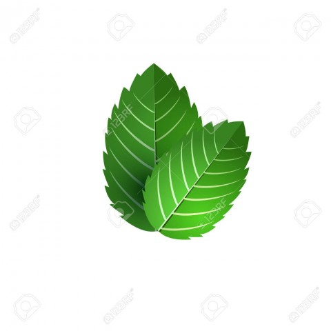 52727620-leaf-of-fresh-mint-bunch-of-mint-vector-object-green-mint-leaf-isolated-mint-cocktail-mint-for-cooki.jpg