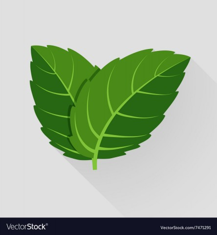 mint-leaves-vector-7471291.jpg