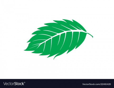 mint-leaf-logo-designs-inspiration-isolated-on-vector-22461420.jpg